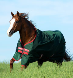 Rambo Original 0g Green & Red running horse