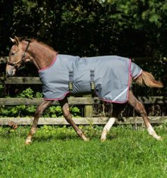 Amigo Foal Blanket Turnout