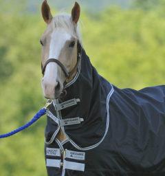 Amigo® Stock Horse Turnout Hood (0g Lite)