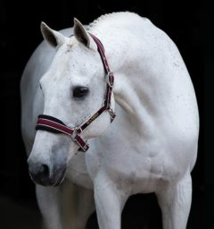Padded Halter Pomegranate by Horseware