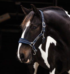 Padded Halter Whitney Stripe Navy by Horseware