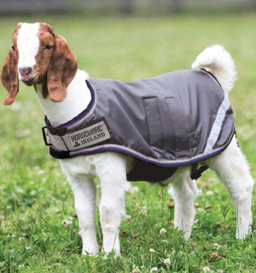 Horseware® Goat Coat