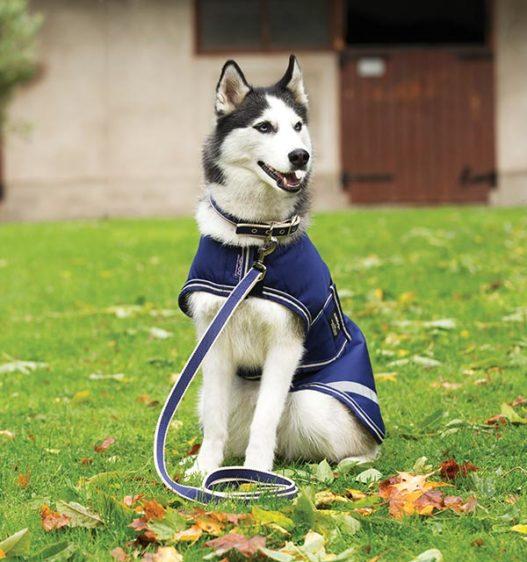 Amigo® Dog Lead