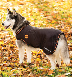 Rambo Ionic Dog Blanket by Horseware