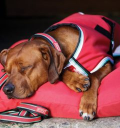 Amigo Waterproof Dog Blanket Red/White/Green/Black