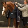 Horseware® Liner (400g Heavy)