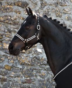 Rambo® Diamante Headcollar