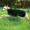 Amigo® Fleece Dog Blanket