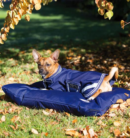 Amigo® Dog Bed