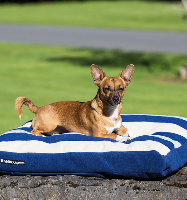 Rambo® Deluxe Dog Bed