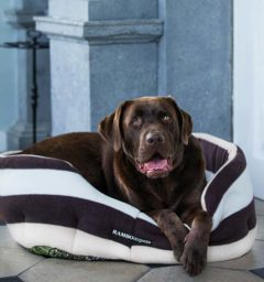 Rambo Dog Bed - Polyester Walls, Fleece Cushion - Whitney Choc