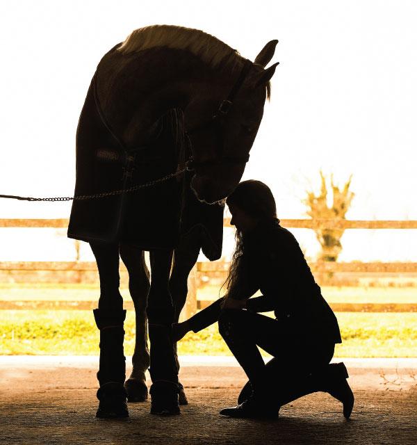 Ionic Technology for horses at Horseware Ireland