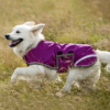 Weekly Deal - Amigo® Waterproof Dog Blanket