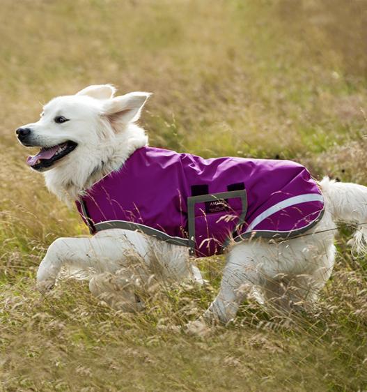 Weekly Deal - Amigo® Waterproof Dog Blanket