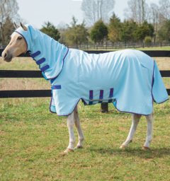 Rambo Pony Hoody Vamoose with No Fly Zone, baby blue with navy