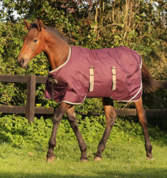 Amigo® Ripstop Foal Turnout (200g Medium)